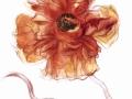 1 Poppy for portrait of Bettina Lobkowicz