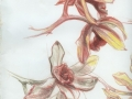 ,, Study of Orchids""