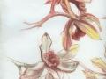""",,Studie of orchideí"""""""